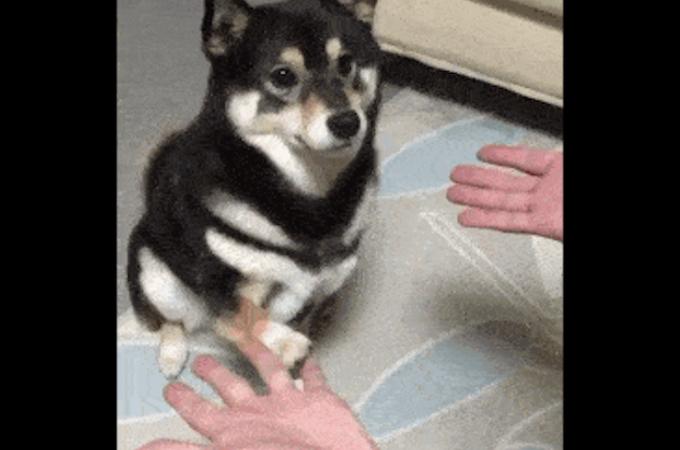 何度も見たくなるようなめちゃくちゃ可愛い動物のGIFに癒される!!