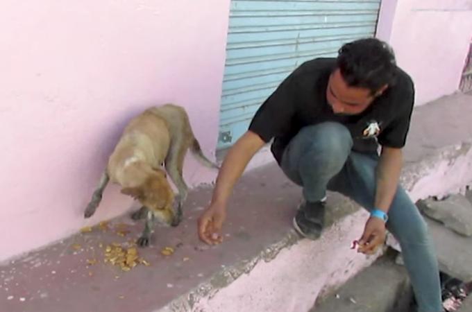 インドで毎日のように動物たちを救助活動している団体。彼らの活躍と市民の協力によって多くの動物たちが救われる
