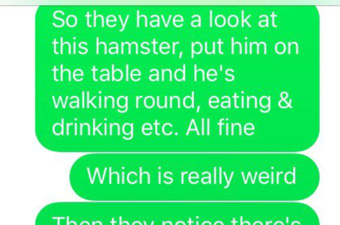 「飼っているハムスターが3日間何も食べない」と少女が獣医のところへ!そして、誰もが予想しなかったその原因とは!