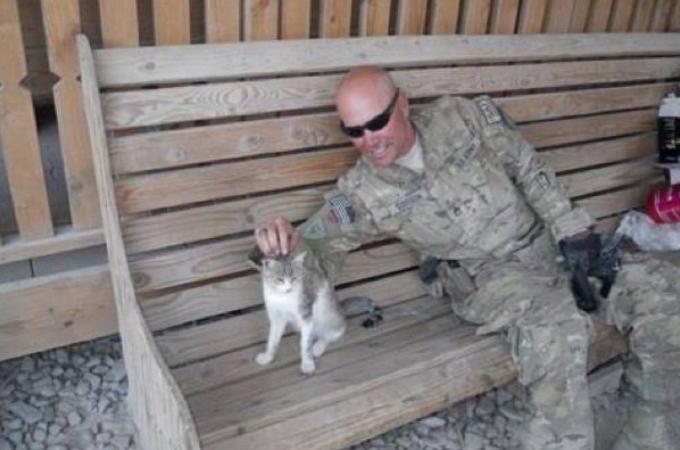 戦地で出会った1匹の野良猫と兵士。その後、お互いに大切な存在となり家族となる。