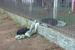 冬の野外でフェンス越しに毛布を分け与える子犬に賞賛の声!そして、飼い主のコメントに考えさせられる。