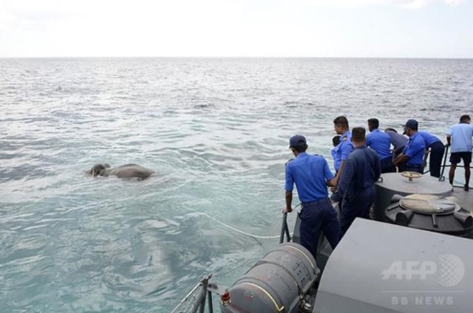 沖に流されてしまったゾウを、スリランカ海軍が12時間かけ「奇跡的」に救出