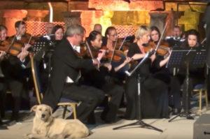 オーケストラの演奏中に急に袖から乱入してきた犬。その後、オーケストラと犬がとった行動とは!