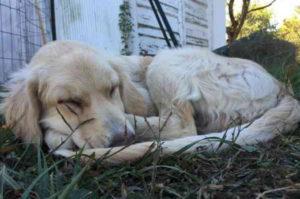 かぼちゃを収穫するために訪れた農場で出会った1匹の犬。その後、ふたりの運命は大きく変わる!