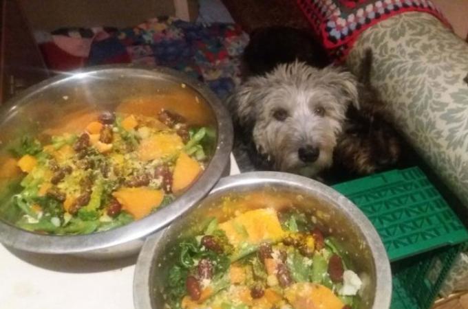 ペットの犬2匹に徹底したヴィーガン生活をさせる飼い主。その後の2匹の健康状態と、獣医の見解とは。