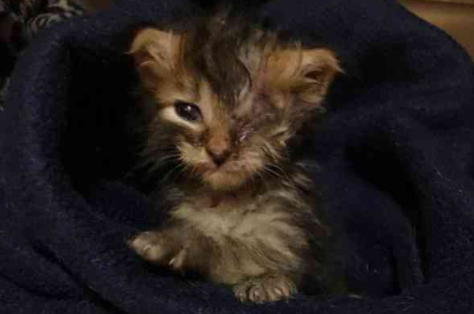 郵便受けに捨てられた子猫。瀕死の状態だった子猫が、人々に愛を受け奇跡的に回復を遂げる。
