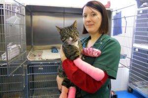 新しい施設に一番最初にやってきた猫。その後、スタッフとして人気者になり多くの人に笑顔を与える存在に。