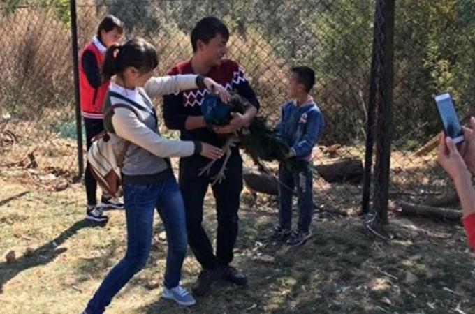 中国の動物園でクジャクが綺麗だといって羽をむしり死なせてしまった男女。世界中から批難が殺到!