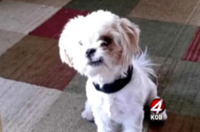 隣人が飼っていたシーズー犬を誘拐し、獰猛なピットブル2匹のエサとして放った男が逮捕される。