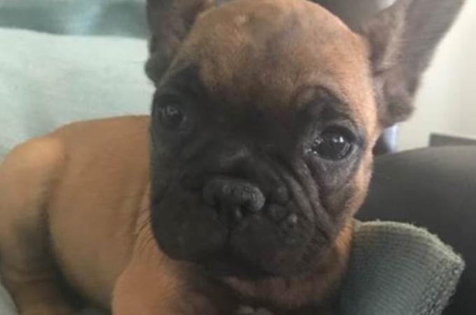ユナイテッド航空にペットの仔犬を預けた男性。到着すると、愛犬は約3,200キロも離れた別の空港へ。