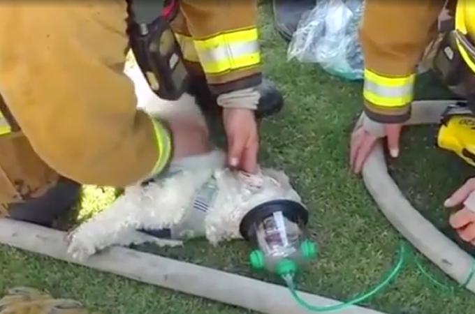 火事に巻き込まれ意識を失った犬を救出した消防士。その様子をFacebookに投稿すると85万回以上再生され賞賛の声が上がる