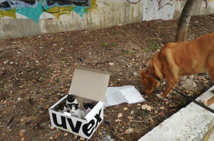 山に捨てられた子猫4匹の微かな声をキャッチし飼い主を誘導した犬。無事に子猫は保護されパパとして活躍する!