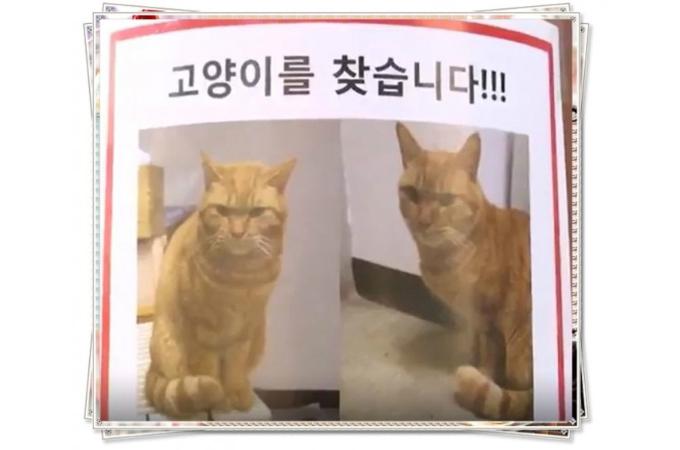 韓国初の猫の駅長が行方不明に。ネットでは「安易に日本の真似をするからこんなことになる」などの非難の声が相次ぐ。