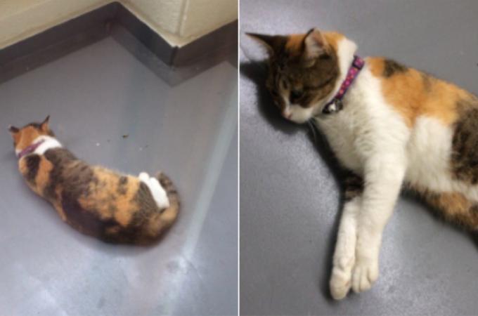 ベランダに訪れていた猫が近所に飼われたと安心した結果、思いもよらぬ自体が起こる!!