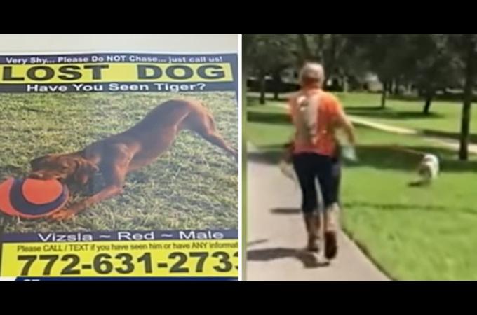 行方不明になった愛犬を探すため約70万円かけ業者に依頼。その結果、見つかった愛犬の手がかりとは。
