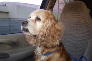 2匹の迷子犬が保護されチップから飼い主を特定。無事に2匹は帰れると思いきや、飼い主がとった行動に憤りを感じる。