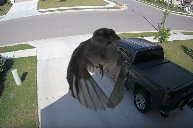 カメラに映り込んだ鳥。その鳥が羽ばたいてもいないのに宙に浮く様子に海外中心に話題に!