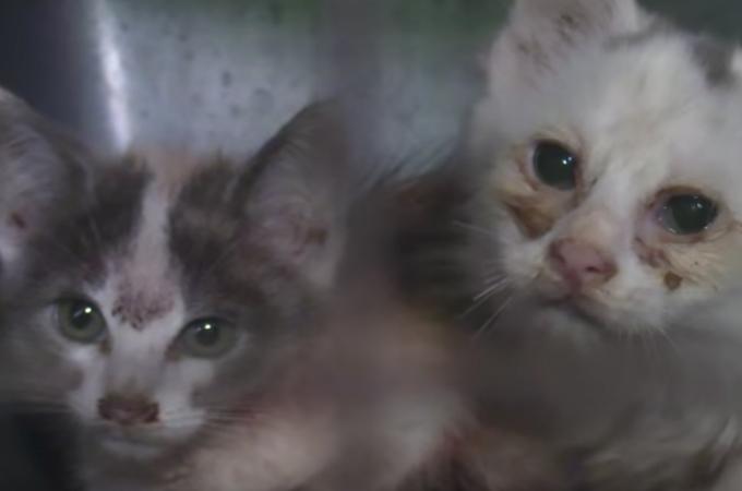 猫を残したまま飼い主が失踪!多頭飼育が崩壊した悲惨な現場から猫30匹以上が救出される。
