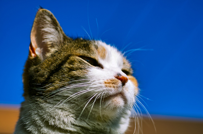 切なくて愛おしくなる「犬の十戒」に比べて、ちょっと笑ってしまう「猫の十戒」が話題に!その内容とは!
