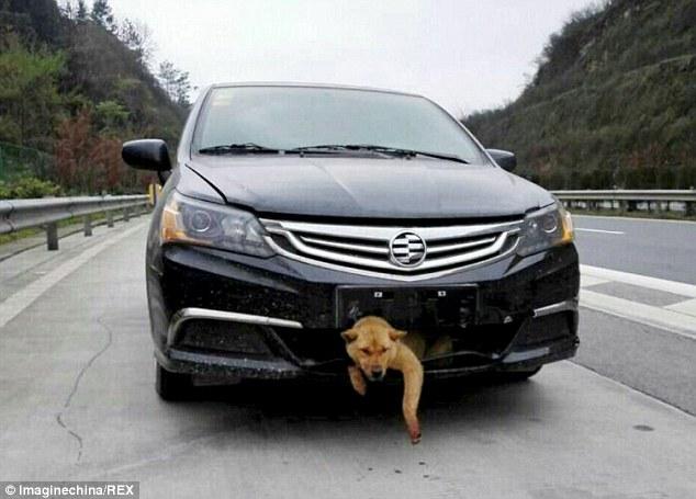 【岡山】新幹線の線路に犬、一時運転見合わせ 犬は見つからず速度を落として運転再開 岡山駅 ->画像>13枚