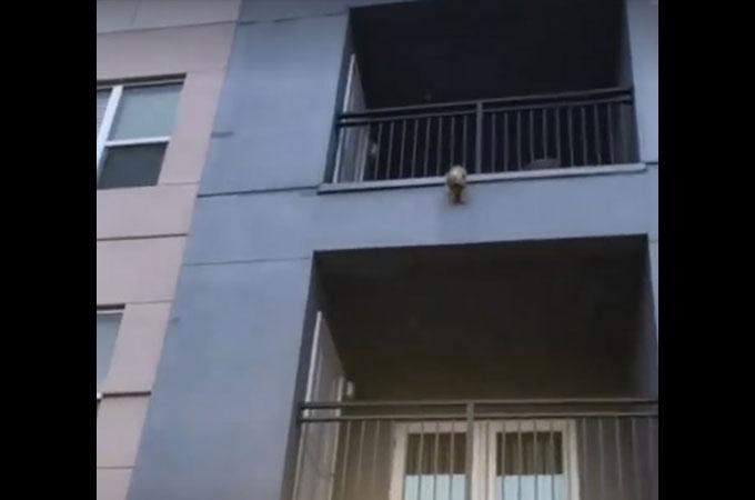 3階建てのベランダから落下した子犬の命を守るため人々が一丸となる