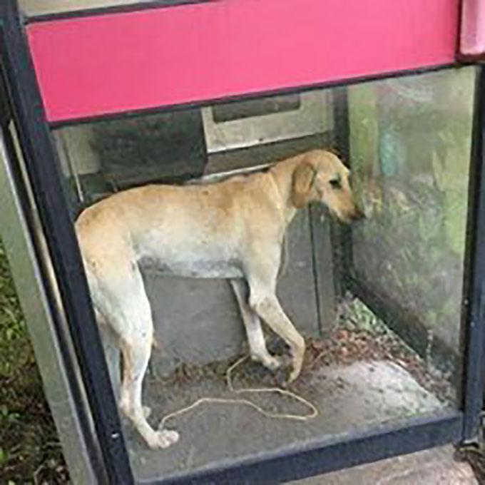 首に紐を巻きつけられ電話ボックス内に閉じ込められ捨てられた犬