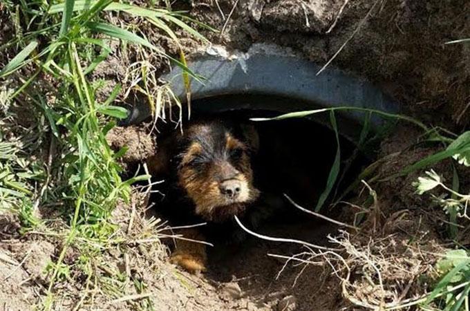 交通事故、狩りの罠にかかり脚を切断するほどの大ケガを負った犬