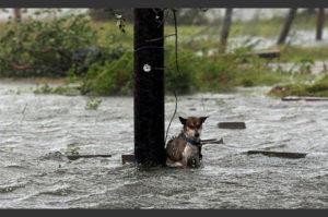 ハリケーンで人々が避難する中 置き去りにされた悲惨なペットたち