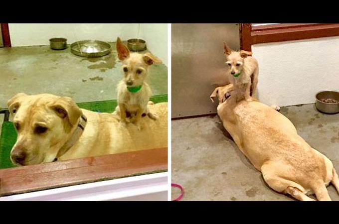 誰にも引き離すことは出来ない!シェルターに保護された深い絆で結ばれた2匹の犬