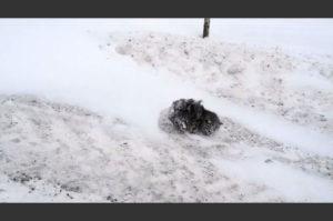 極寒の地 路上で凍りついてしまった1匹の子猫が再び息をふきかえす