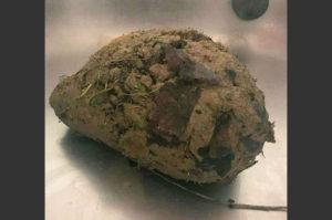 泥が固まると呼吸困難に!動物病院へと運び込まれた謎の泥団子の正体はヘッジホッグ