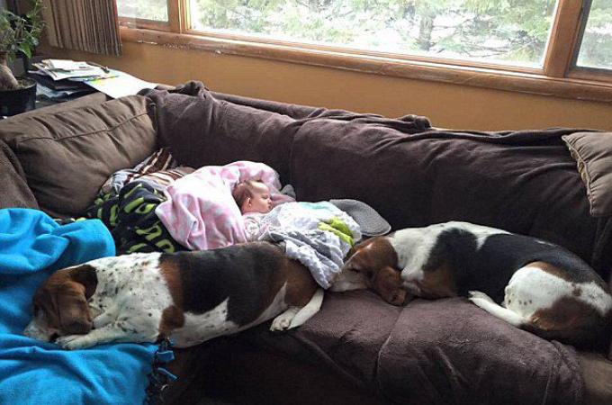 どんな時でも家族のそばにいた2匹の愛犬。赤ちゃんの最期まで寄り添う。