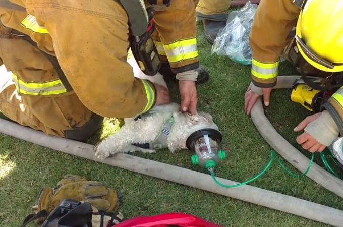 ペットの命を救いたいと願う2人の少女。その思いが通じ命を1匹の犬の命を救う。