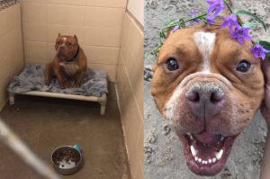 ひとりの女性のTwitterでの投稿がきっかけで、保護され幸せを手に入れた犬たちの写真が次々の投稿。その様子に心が和む。