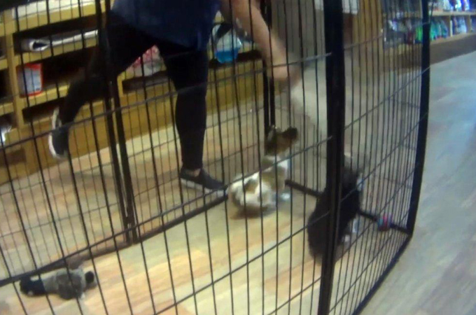 悪質なペットショップに潜入捜査した動物愛護団体。店内で日々、行われていた酷い行為の数々に言葉を失う。