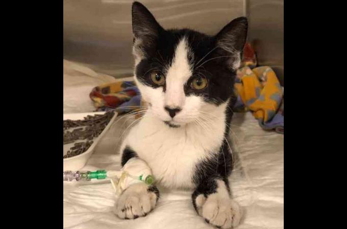 体の不調によって「幸せになれない」と判断され、殺処分が決まっていた猫が1人の女性によって奇跡的に回復する!