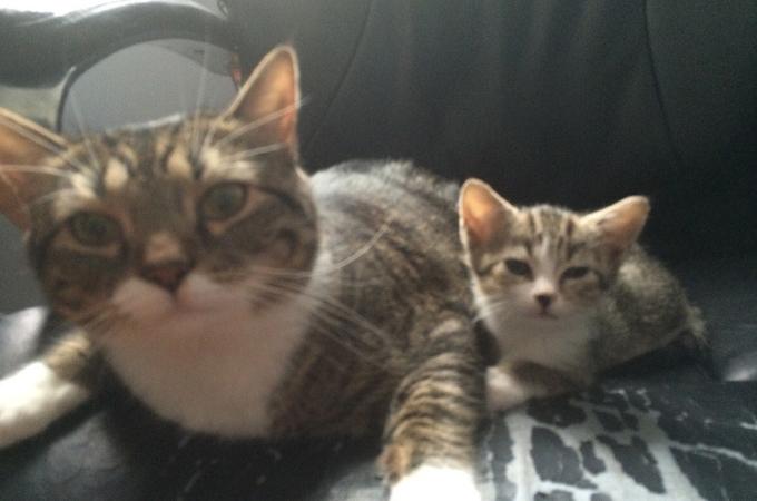施設で暮らしていた猫の親子。別々に引き取られることが心配される中、無事に同じ里親に引き取られる。