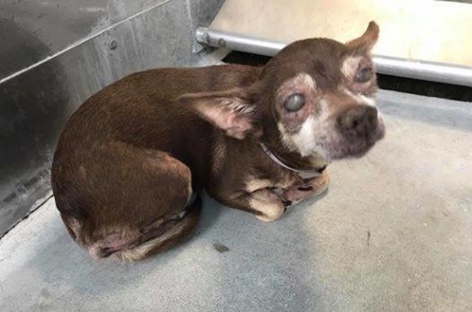 飼い主によってシェルターに持ち込まれた目がほとんど見えない13歳の老犬。その悲しい表情に胸を打たれた女性が家族となる。