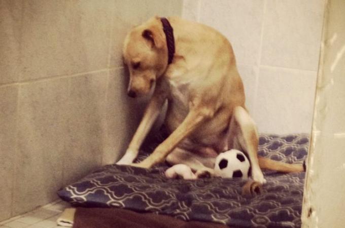 里親が見つかるも、すぐにまた施設へと戻された犬。背中を丸め落ち込む、その姿に胸が苦しくなる。