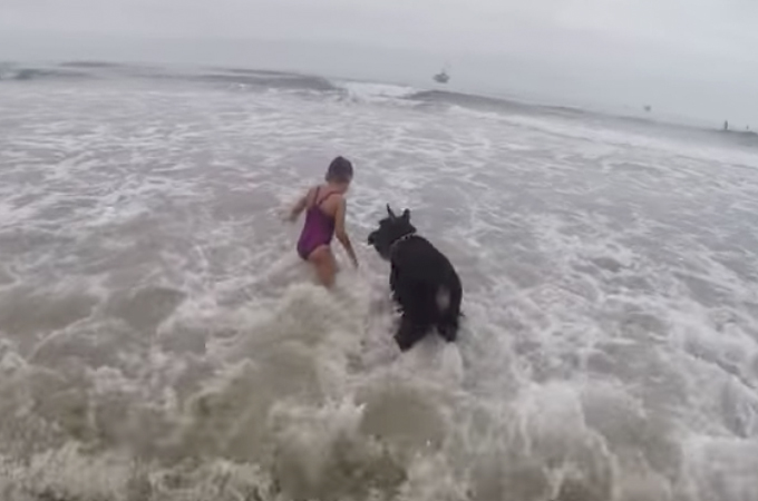 波打ち際で遊ぶ少女と犬。はしゃぐ女の子のそばを離れず見守る犬の姿が頼もしい!