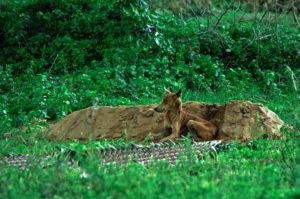 若くして急逝した飼い主の墓のそばで15日間も動かずにいた忠犬。飼い主の母親との出会いによって大きく変わる。