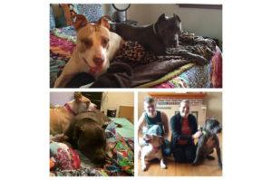 虐待され傷ついた2匹の犬。痛みを分かち合い寄り添う姿に心打たれた夫妻が2匹を家族として迎え入れる。