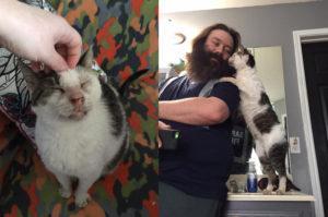 何年も放置され愛情に飢えていた老猫が新しい家族との出会いで大きく変化する。