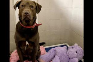 動物保護施設で暮らす1匹の犬の親友がズタズタに引き裂かれた状態で発見。その事件の真相と、結末とは!
