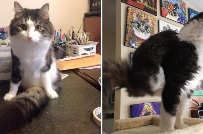 生まれつき後ろ足がない猫。しかし、ハンディキャップを感じさせることなく前向きに生きる。
