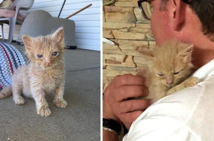 瀕死の状態から奇跡的な回復を遂げた子猫。無事に新しい家族と巡り会い大きく成長する。