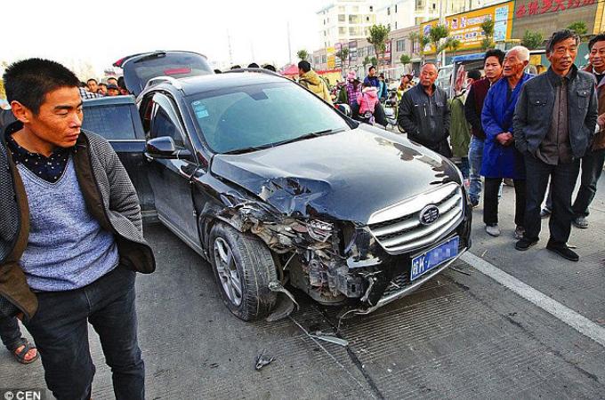 交通事故をした車の車内から50匹もの犬の死骸が。運転手はその場から逃亡。そして、その理由とは。