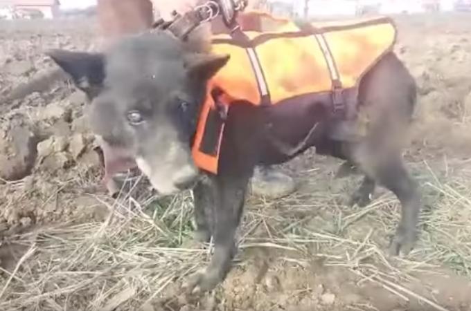 井戸の中に犬が落ちているのに気付いた子供たち。食べ物を投げ込んだりしながら、救助が来るのを待つ。
