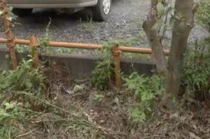 千葉県市川市で紐で首などを縛り付けられた状態の猫が発見される。胴体部分も削ぎ取られる残虐性に憤りを覚える。