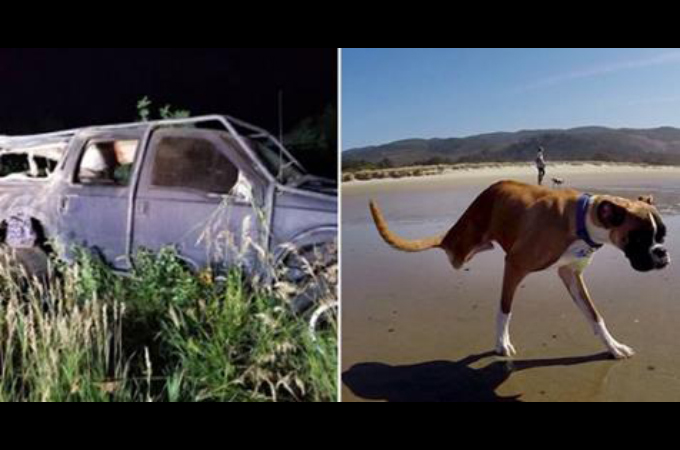 2本足のボクサー犬「ダンカン」が交通事故によって行方不明に。そのことを知った多くのファンがSNSを使い拡散。その結果。